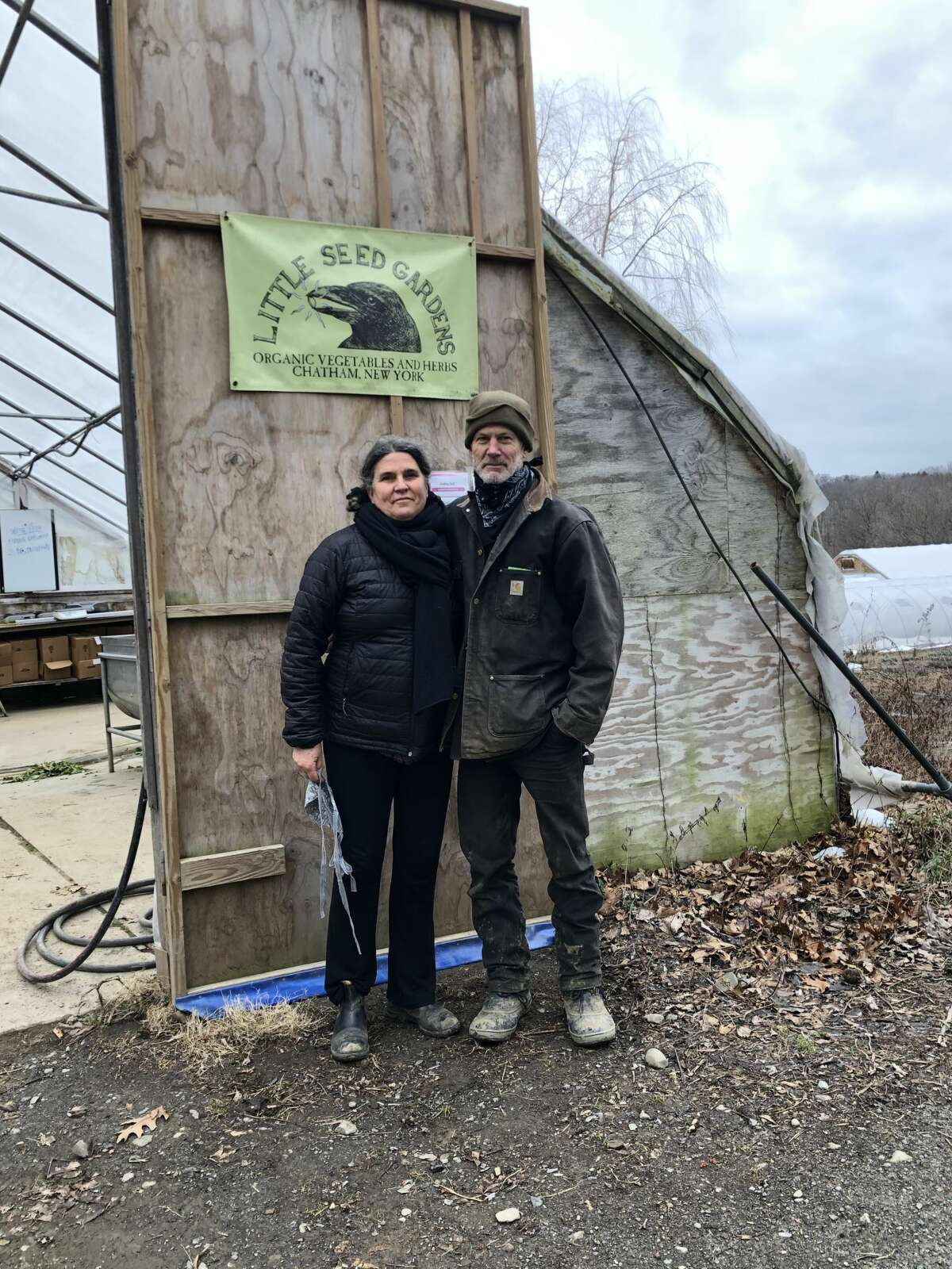 Randall lineback cattle, a rare breed, can be seen at Little Seed Farm in Chatham, run by Claudia Kenny and Willy Denner.