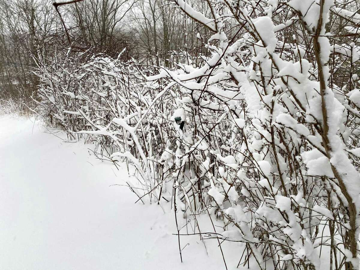 Wilton received a heavy covering of snow Monday, causing the town's schools, library and various establishments to close with many residents wondering if they will lose power Monday evening.