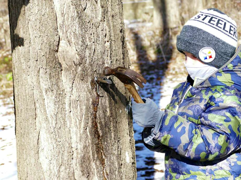 """Will Shevchik, 5, hammered home the spout in his designated maple tree on Saturday, Jan. 30 at the New Canaan Nature Center. This past Saturday, numerous families from New Canaan and beyond arrived, bundled in their warmest winter gear, to partake in the nature center's """"Adopt-a-Tree"""" program. The event promised each family the opportunity to designate one maple tree as their own on the nature center's campus, which spans roughly 40 acres. Led by naturalists Derick Hips and Christiana Ricchezza, the families visited the Maple Sugar Shed to pick out their own buckets and spouts before trekking out to the wooded area just beyond the visitors center to find their own tree.  Photo: J.D. Freda / Hearst Connecticut Media"""