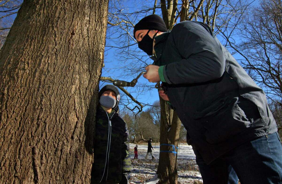 Dan Shevchik uses an auger to drill a hole into a maple tree Saturday as his son Will, 5, looks on during an excursion for families to gather sap to make maple syrup at the New Canaan Nature Center in New Canaan. After using a wood auger to drill a small hole in the trunk of the maple tree, families hung a bucket under a spout to collect the tree sap. Will Shevchik, 5, of New Canaan, hammered in the spout in his maple tree with the help of father Dan and under the watchful eye of his younger brother Ben, 2.
