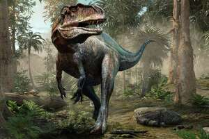 The Acrocanthosaurus (A. atokensis) was a deadly bipedal dinosaur of the early Cretaceous period more than 100 million years ago. Its original North American habitat included the area that's now San Antonio.