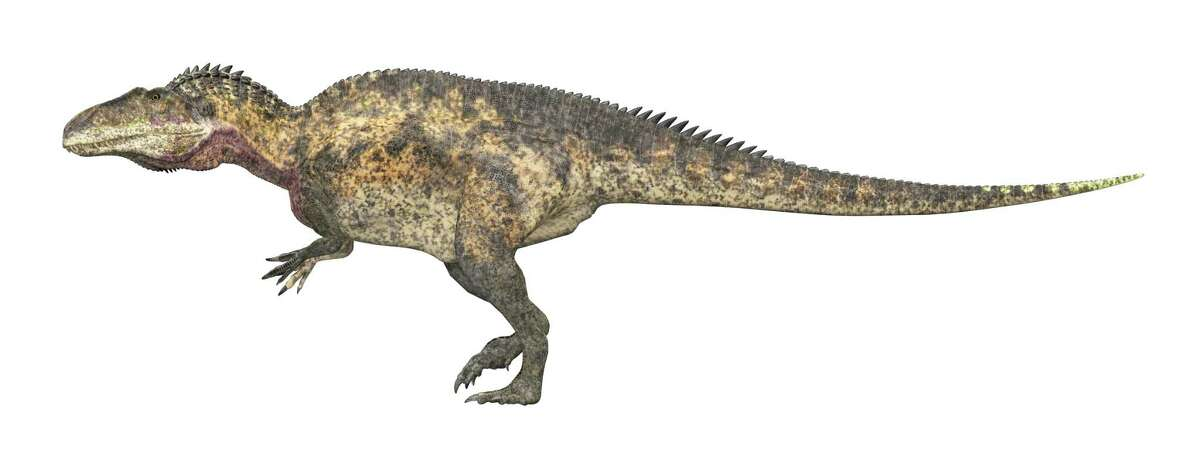 """This computer-generated illustration of an Acrocanthosaurus shows its humplike back. The name Acrocanthosaurus means """"high-spined lizard."""""""