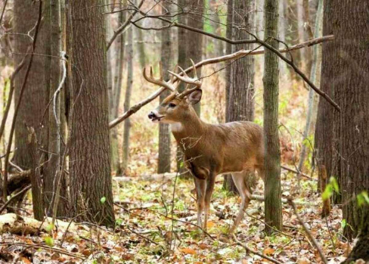 Osceola County had 4,406 deer license customers as of Nov. 22, 2020. (Herald Review file photo)