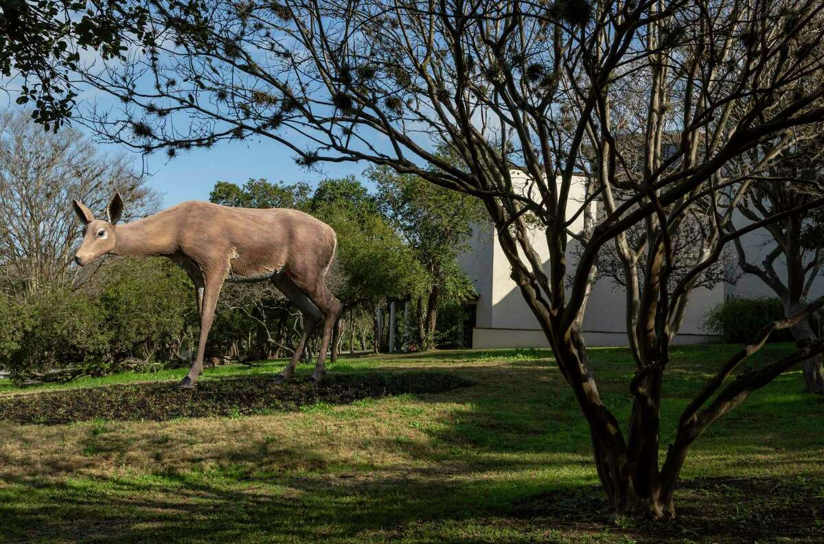 """""""Deer,"""" a 2015 fiberglass, steel, paint and epoxy sculpture by Tony Tasset, cam be found on the grounds of the McNay Art Museum."""