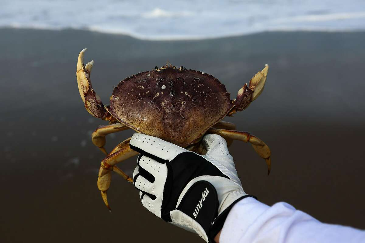 Robert Nguyen holds a crab after catching it at Baker Beach in San Francisco.