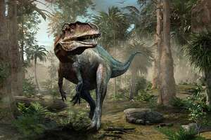 The Acrocanthosaurus (A. atokensis) was a deadly bipedal dinosaur in the early Cretaceous period more than 99 million years ago. Its habitat included what is now the I-35 corridor.