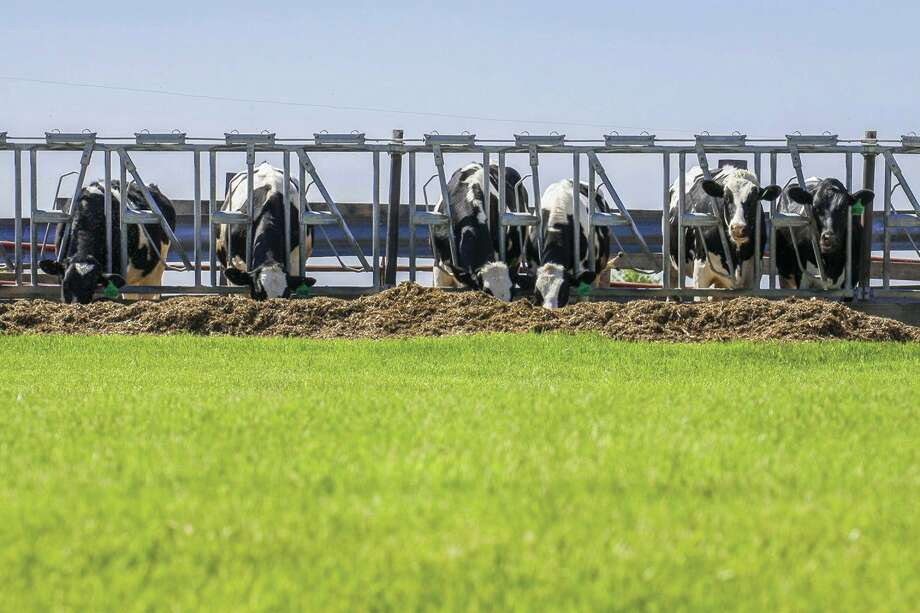 Proposals for anaerobic digesters in Huron County would use the manure from dairy cows to obtain methane gas for use as a natural gas. (Metro Creative Graphics/Tribune File Photo)