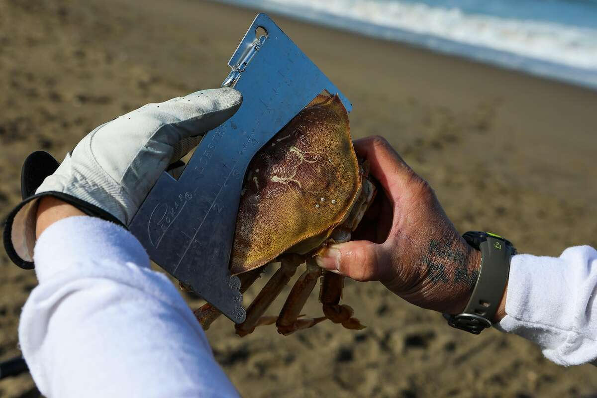 Robert Nguyen, 47, measures a crab he caught as he fished for Dungeness crabs at Baker Beach.