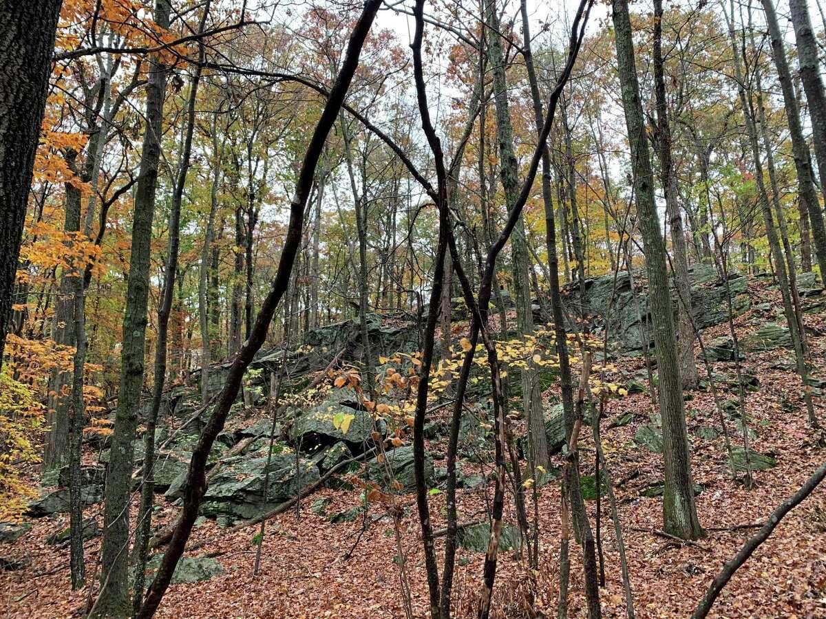 Hurlbut Woods Preserve-Roxbury Land Trust