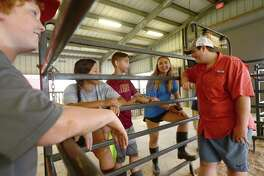 From left, Alex Gorsich, Kelly and Javi Velazquez, Annabelle Benton and Dylan Diaz joke with one another after chores at the BISD Agriculture Department's barn Monday. While certain aspects of the curriculum could move online, as had all coursework in the wake of COVID-19 school closure, the ag program was unique. Students in the FFA have animals, whose care cannot be done virtually. Feeding, cleaning, mucking stalls and cages and walking the animals are daily chores, and department head Stephanie Hoppe had to devise a plan to allow students to tend to their animals while adhering to safety guidelines. And the number of animals needing care was greater than normal, as the closure of the South Texas State Fair and Houston Rodeo meant animals that normally would have been shown and later auctioned, were now back at the barn. Hoppe and students hustled to find buyers, only to be met with a wait list for packing houses. The cost of feeding those animals in the meanwhile fell to students, some of whom broke just above even by the time their animals left the barn. Photo taken Monday, June 22, 2020 Kim Brent/The Enterprise