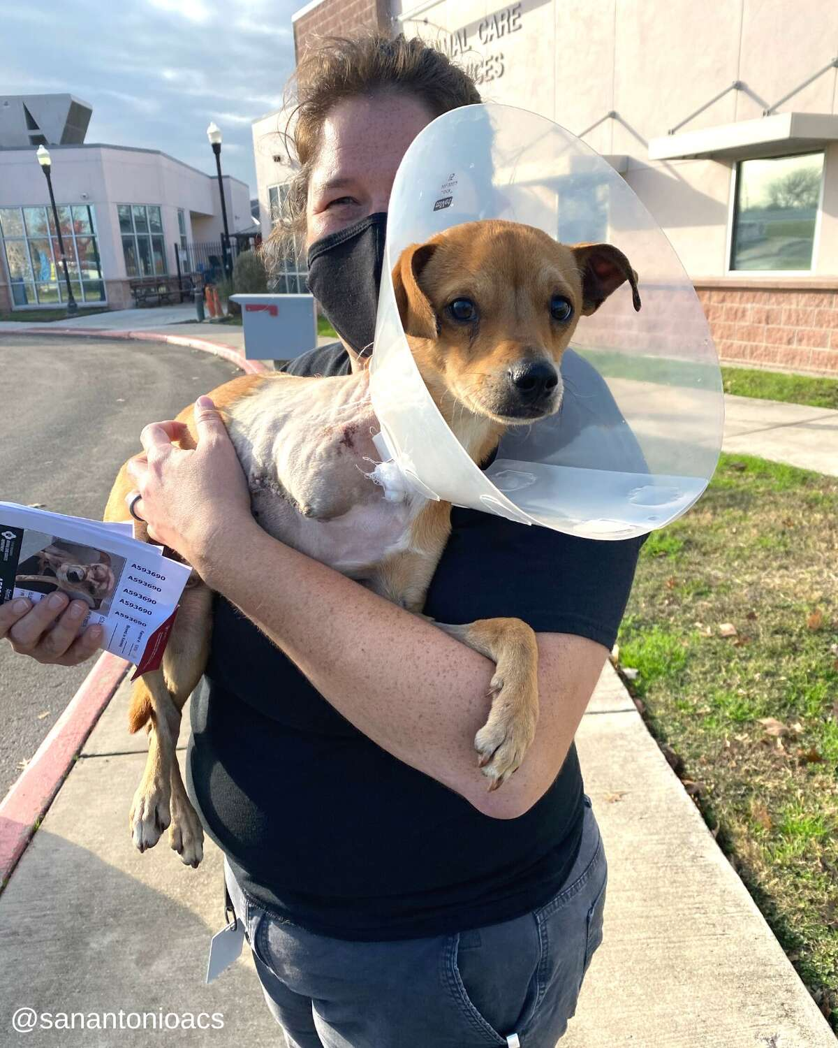 Tres, a pup found with a broken foot on the West Side of San Antonio had to get his leg amputated. After a speedy recovery, he is being transferred to the Texas Chihuahua Rescue, Inc where they will put him under their care until he's ready for adoption.