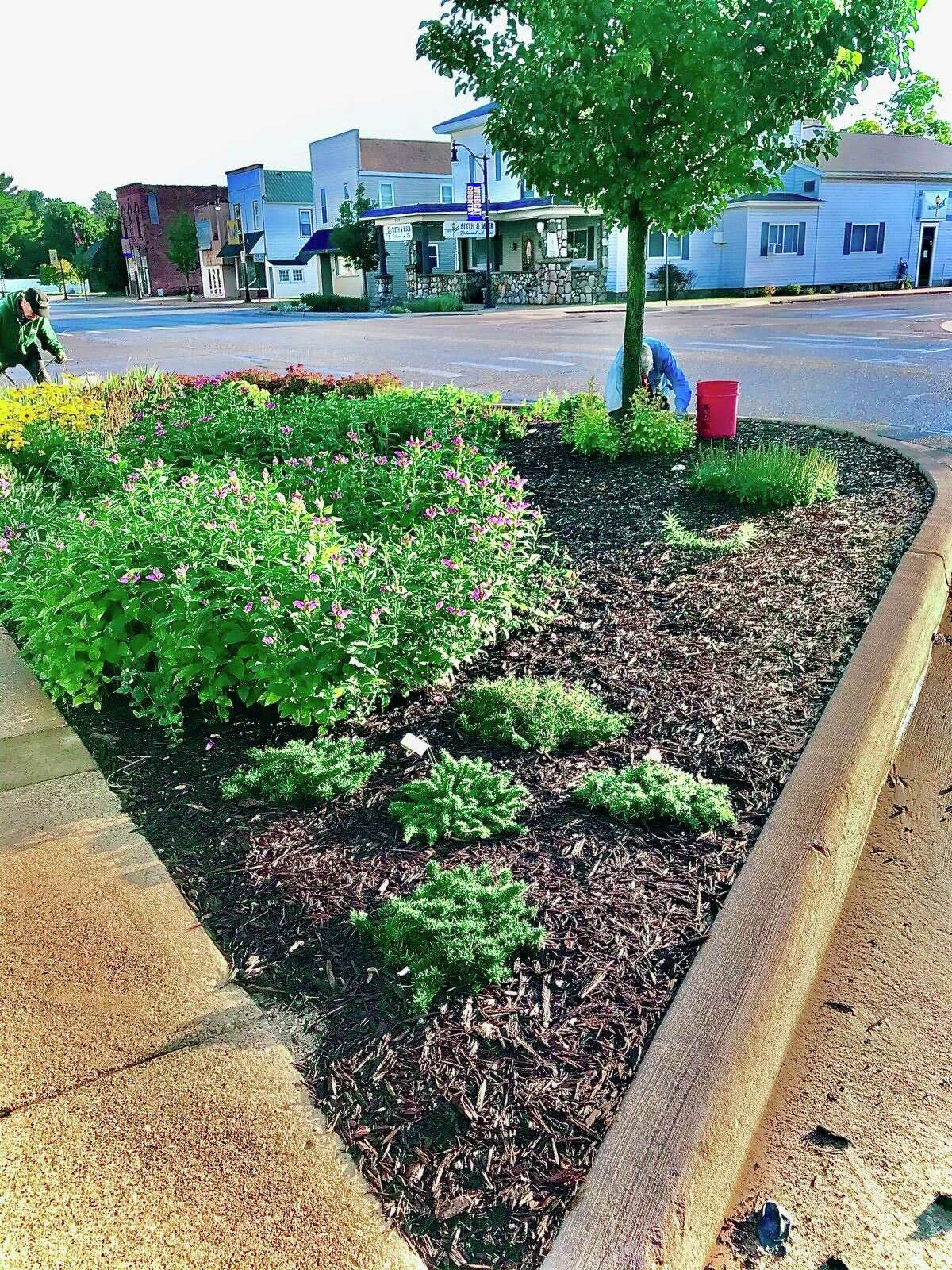 The bump-out flower beds in downtown Evart have been cleaned up a replanted by the Evart Garden Club, creating a Monarch Waystation with native plants that can be easily maintained. The club will continue its work this spring, adding more plants and more flowerbeds. (Submitted photo)