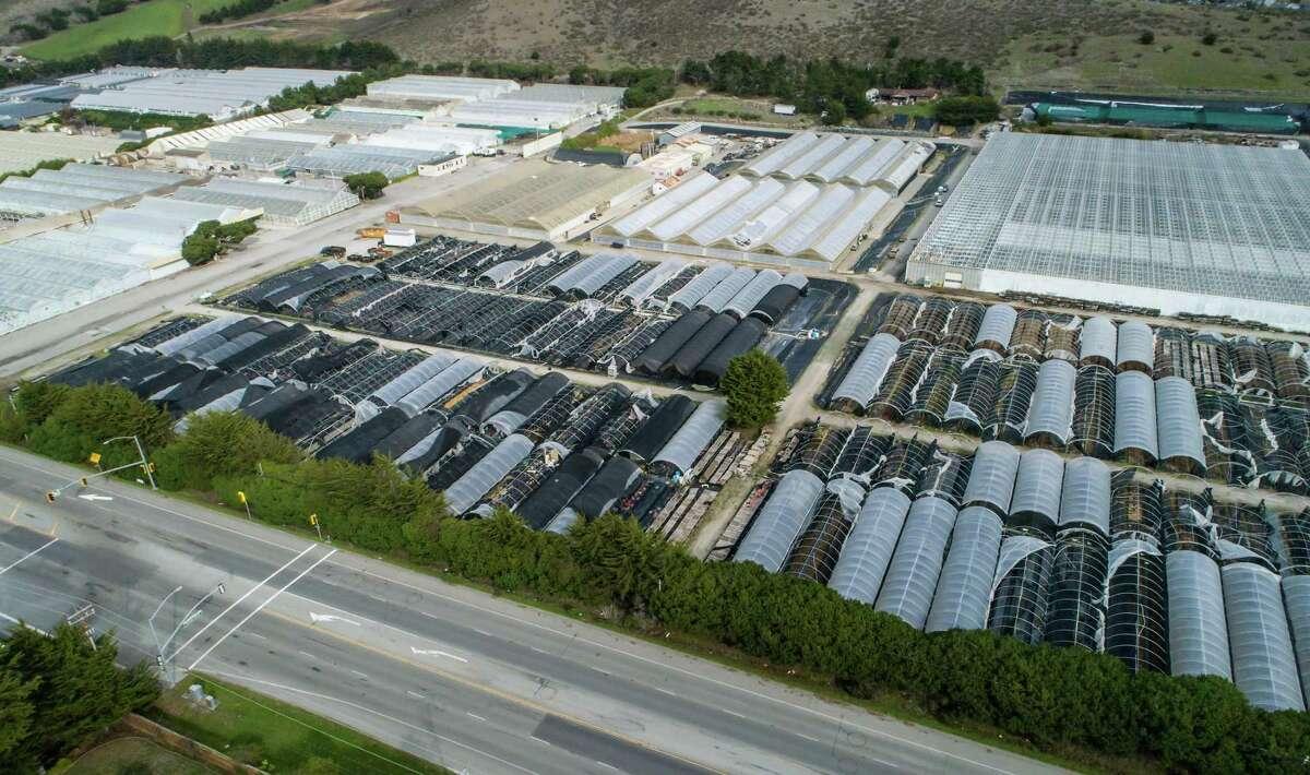 Castillo Seed Co. in Half Moon Bay.