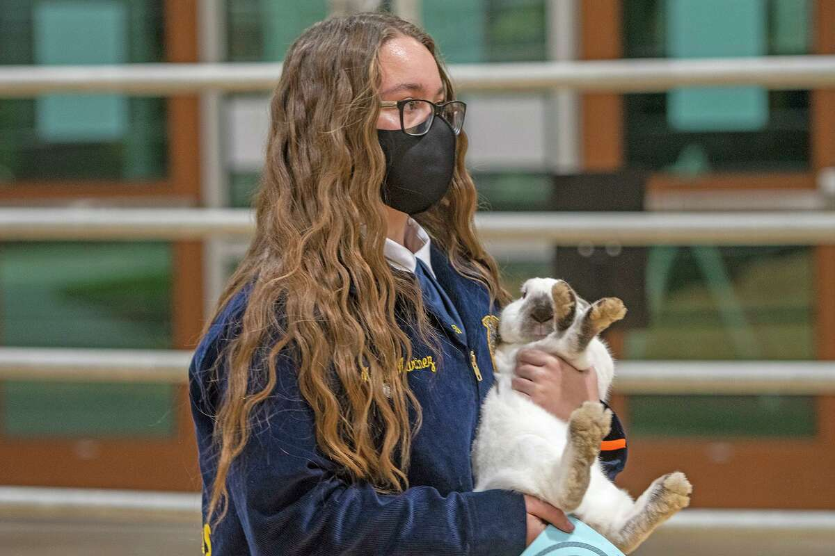 A Cy-Fair ISD student holds her rabbit during the 27th annual CFISD Livestock Show and Sale.
