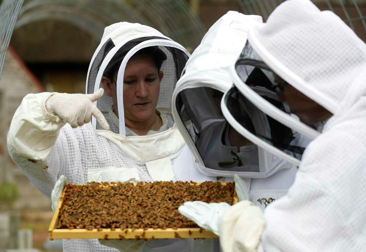 Beekeeper Nanette Davis, left, points out what she looks for when she inspects a hive to student Felicity Newby, center, and her mother, Angela, Thursday, Feb. 4, 2020, in Porter. The Montgomery County Beekeepers Association has expanded its youth program into a mentorship program where youth maintain their own bees to further their understanding about the profession and bees' role in nature.