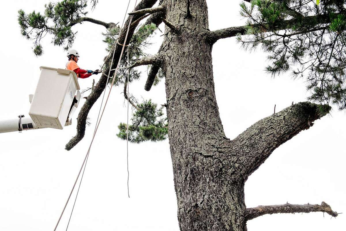PG&E is refining its tree trimming as part of a new wildfire prevention plan.
