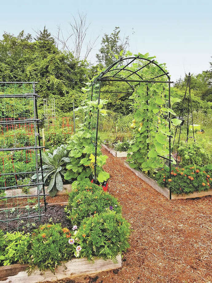 Incorporating trellises into garden plans can allow beans, peas, tomatoes and even squash to be trained to grow vertically. Photo: Gardener's Supply Co.