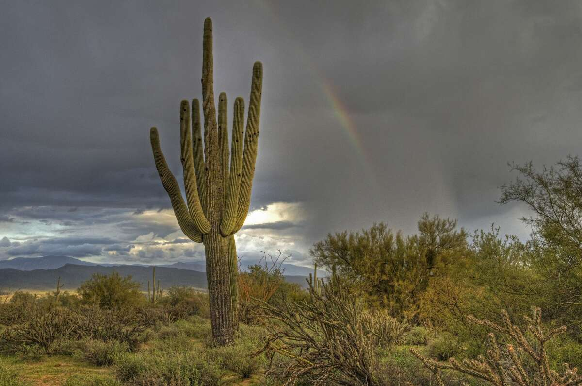 Rainbow in desert with cactus in foreground, storm in McDowell Mountain Regional Park, located Northeast of Phoenix.