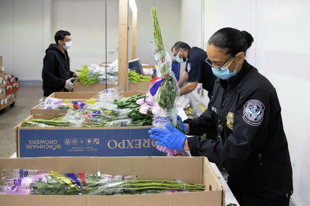 Agentes de Aduanas y Protección Fronteriza, especialistas en agriculutra, inspeccionan tallos de flores importadas en el Puerto de Miami, Florida, el 5 de febrero de 2021. Más del 90 por ciento de las flores que se importan en Estados Unidos llegan al Puerto de Miami.