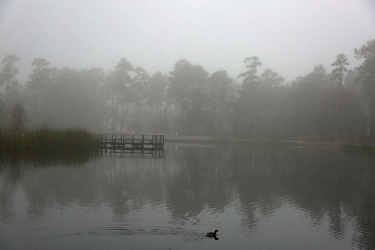 A water fowl makes its way across Hines Lake during a foggy morning at Memorial Park in Houston on Tuesday, Feb. 9, 2021. Fog is expected to to linger through tonight, especially closer to the coast, according to the National Weather Service.