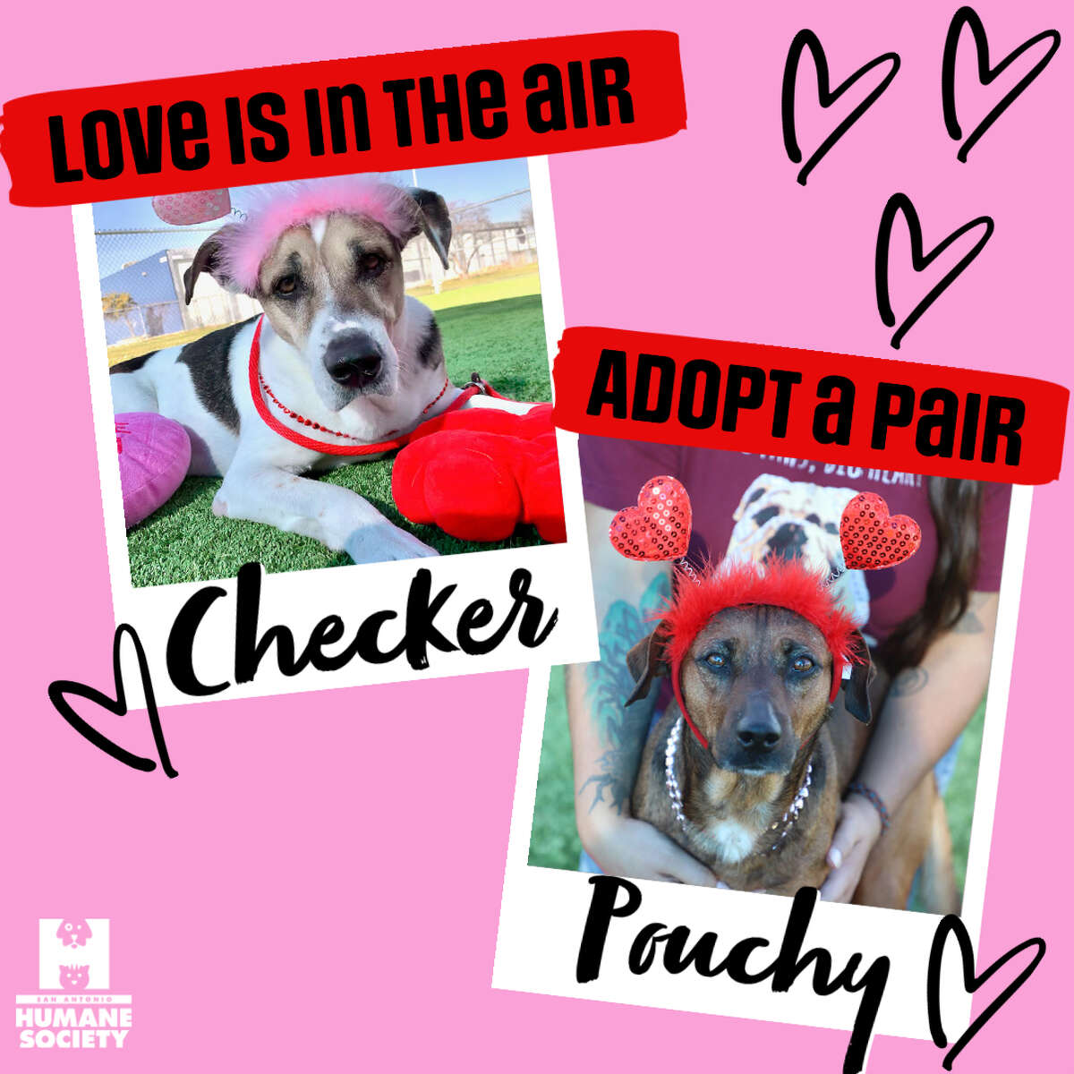CHECKER AND POUCHY