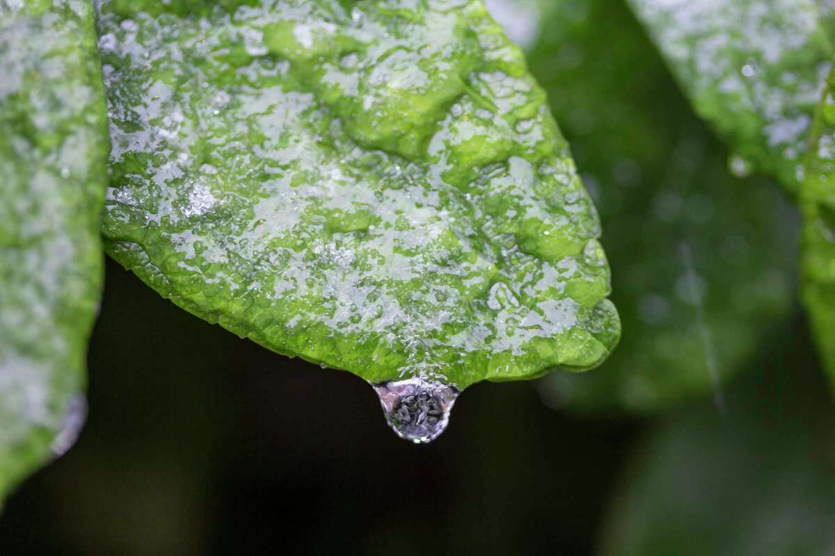 A storm that hit the greater Houston area left ice covering plants throughout the region.