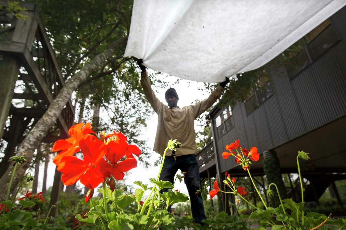 It's time to prepare the garden for temperatures in the 20s. Mikewell Tolbert covers geraniums in preparation of freezing temperatures at the Mercer Arboretum and Botanical Gardens in advance of a past Houston freeze.
