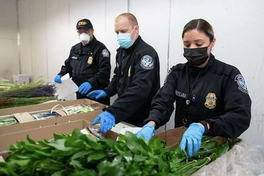 U.S. Customs and Border Protection's highly skilled agriculture specialists examine arriving cut flower stems to prevent plant diseases and plant pests from entering the country. Photo: Courtesy Photo /U.S. Customs And Border Protection / U.S. Government Works