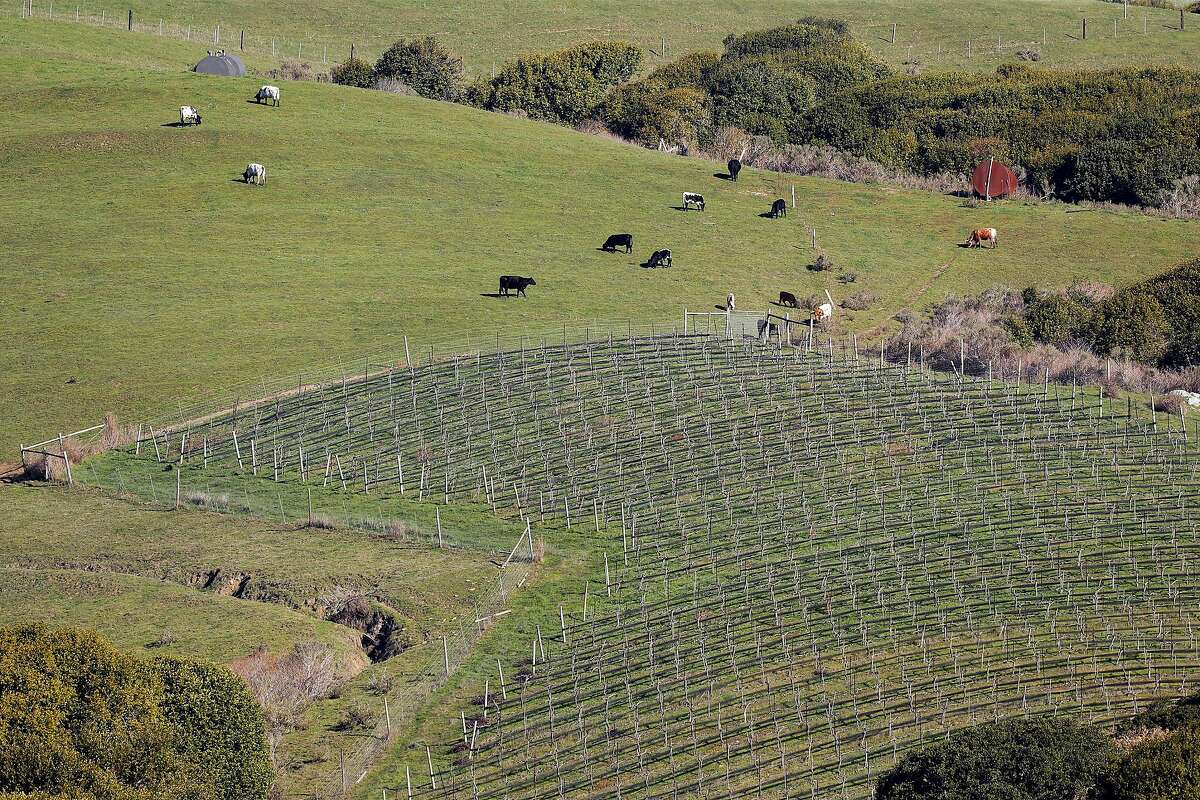Point Reyes Vineyards is the only vineyard with a winery and tasting room on-site in Marin County, its real estate agent says.