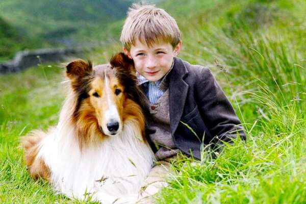 """Best dog movies of all time If there's one animal nearest and dearest to the collective heart of mankind, it's the canine, which has been a staple in cinema for more than a century. In fact, the trend dates all the way back to 1905, when a male collie named Blair starred in the British short film, """"Rescued by Rover."""" True to its name, the film follows Rover as he helps in the recovery of a kidnapped baby. Good boy, Rover! On the heels of Blair came a female collie named Jean, widely considered to be the first true canine movie star. A number of famous dogs would emerge in Jean's wake, including Rin Tin Tin, who was popular enough to have a book written about him decades after he passed away. Of course, it's the films and franchises themselves that truly endure and continue to enrapture new generations. After all, a movie like """"Old Yeller"""" might seem dated in terms of style, but emotionally speaking, it's as poignant now as ever. All this talk of dogs in film might lead one to wonder: what are the most popular dog movies of all time? Like a well-trained canine, Stacker is here to heed the call. Stacker compiled data fromRotten Tomatoes on all dog movies and ranked the top 50 according to the Tomatometer, with the freshest movie sitting at #1. To qualify, the film had to have canines that were prominently featured characters, if not the focus of the film. Ties were broken by number of critic reviews and further ties broken by audience score. Data is current up through Jan. 31, 2021. Without further ado, here are the best dog movies of all time. You may also like: 100 best Westerns of all time"""