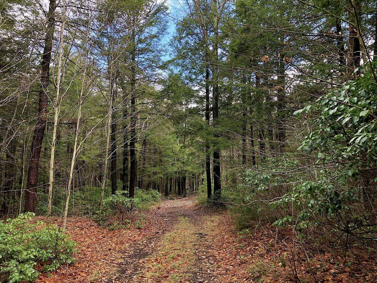 Trails pass through hemlock glades and mountain laurel groves.