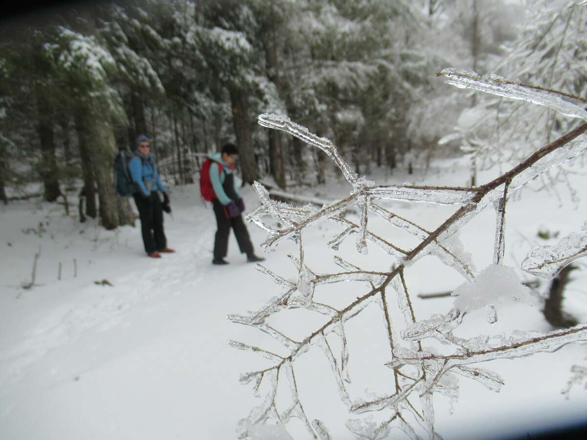 Ice coats branches along the Black Mountain trail in January.