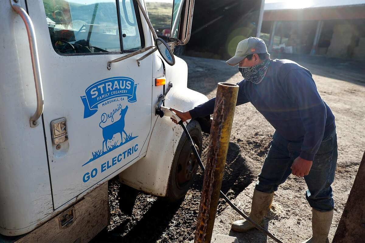 Juan Hernandez unplugs an electric truck powered by energy from the methane digester at Straus Dairy Farm in the Marin County community of Marshall.
