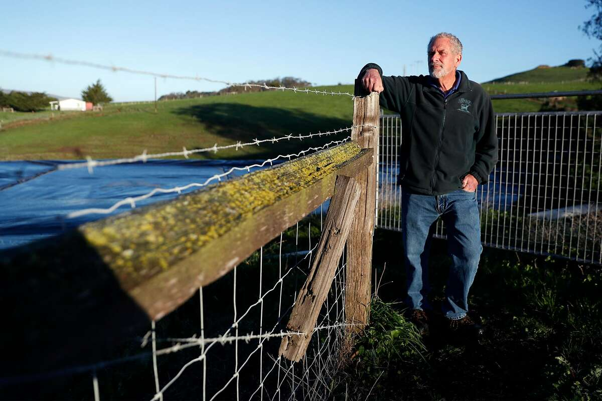 Albert Straus hopes his organic family dairy in Marin County will be carbon-neutral by the end of the year.