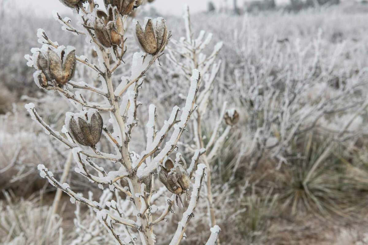 Continued freezing temperatures and light moisture left Midland coated in ice 02/12/2021 with temperatures expected to get even colder and snow to fall in the area. Tim Fischer/Reporter-Telegram