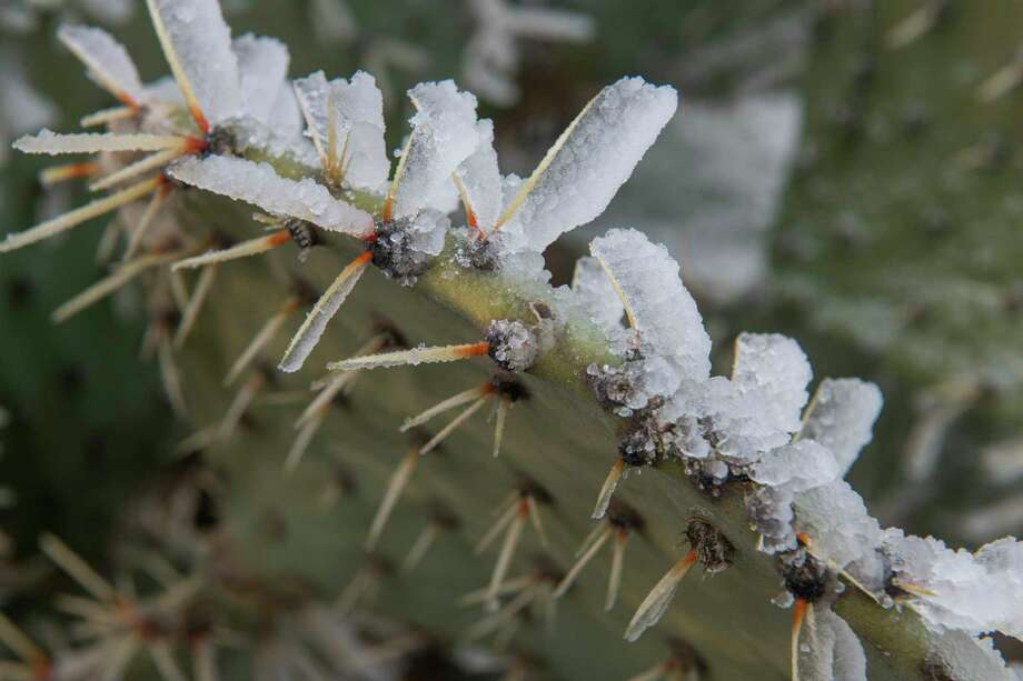 Continued freezing temperatures and light moisture left Midland coated in ice 02/12/2021 with temperatures expected to get even colder and snow to fall in the area. Tim Fischer/Reporter-Telegram Photo: Tim Fischer, Midland Reporter-Telegram