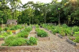 Bible Street community garden.