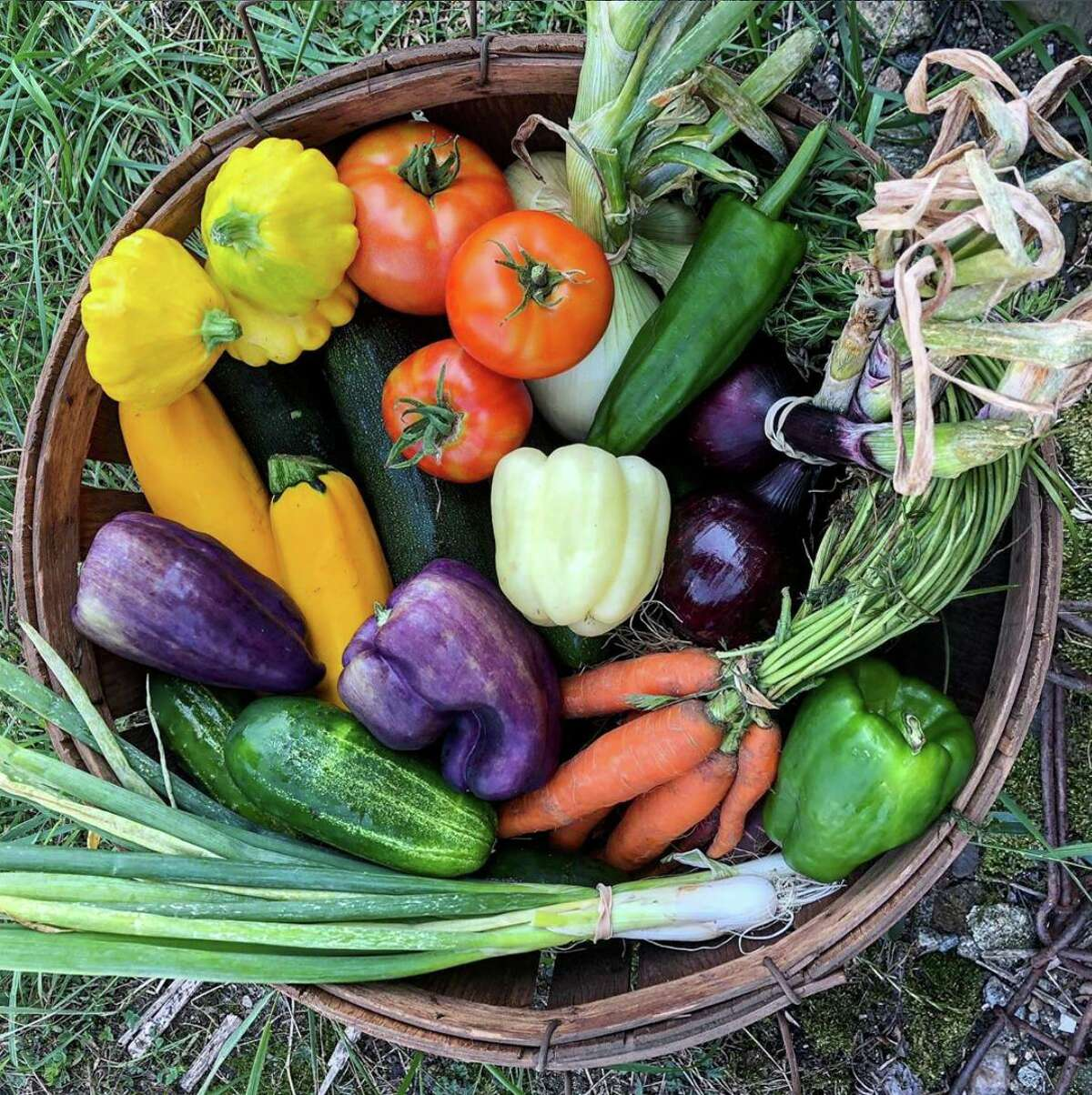Buying into a CSA share entitles the owner to a portion of the farm's produce.