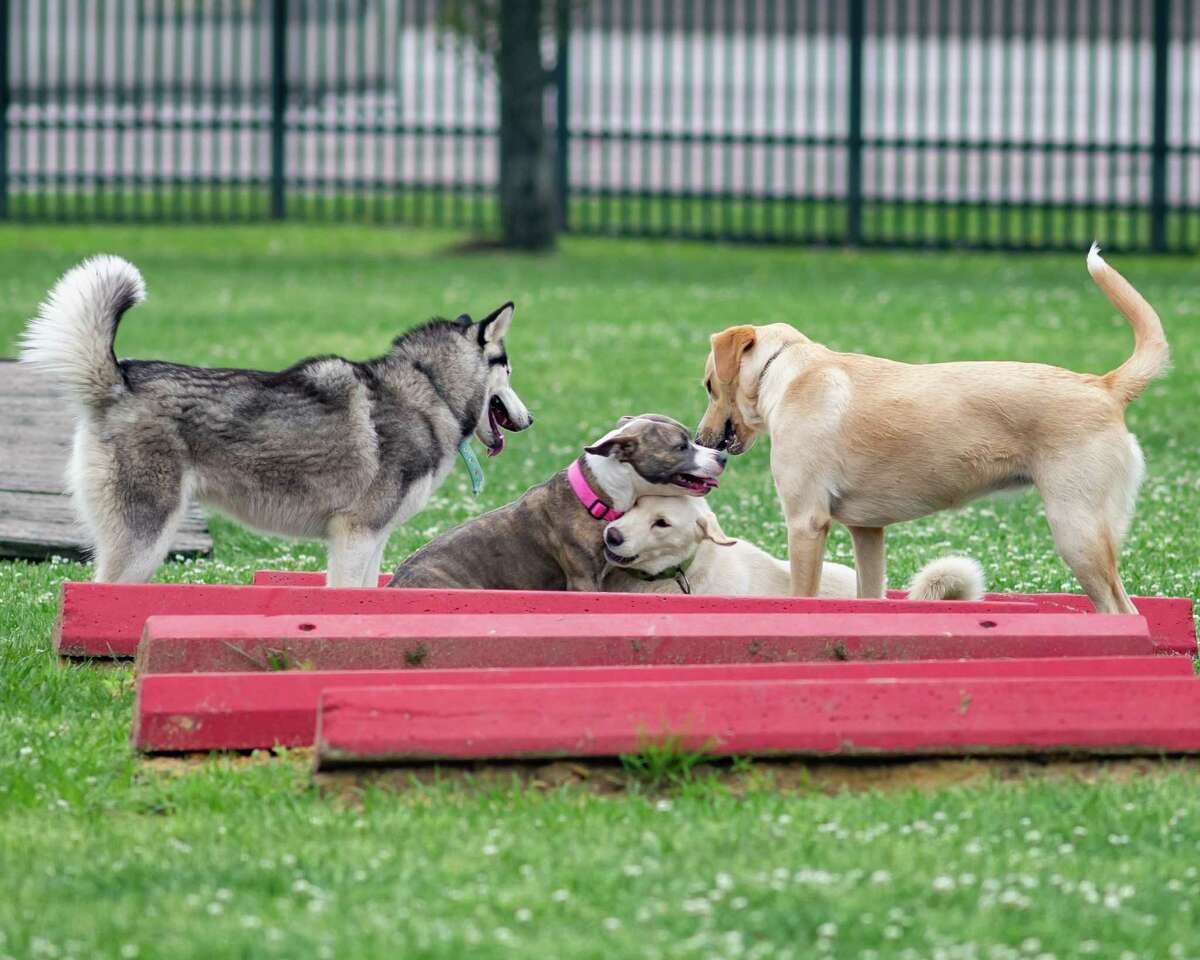 For new friends Sophie, Kirksey, Anna, and Little girl, it was just another funday Sunday at the Ida Reed Dog Park on March 22, 2020. Fran Ruchalski/The Enterprise