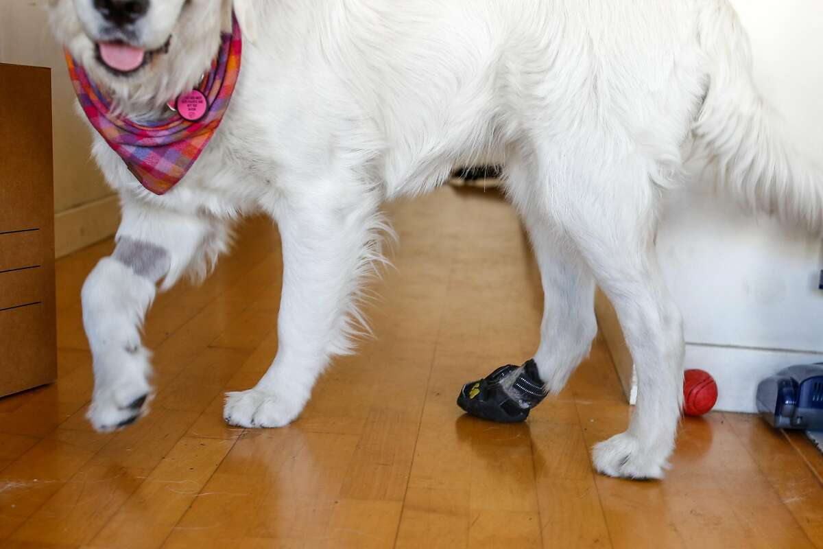 Kieran Blubaugh's dog, Julia, has a protective cast on her paw after stepping on glass. Blubaugh is leaving San Francisco and moving to Dallas.