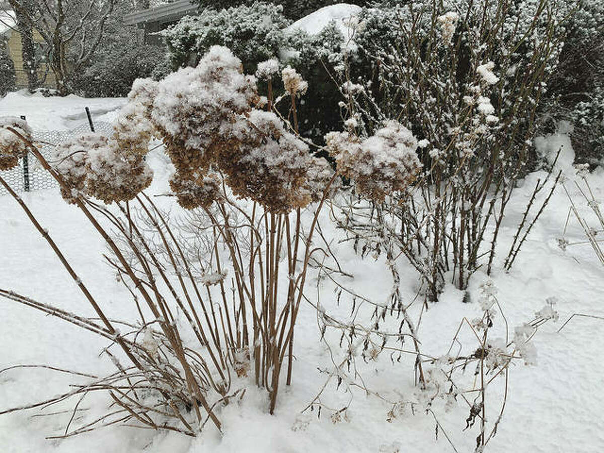 Deep into this pandemic winter, it can be hard to remember what a refuge gardens were for many people last spring and summer.