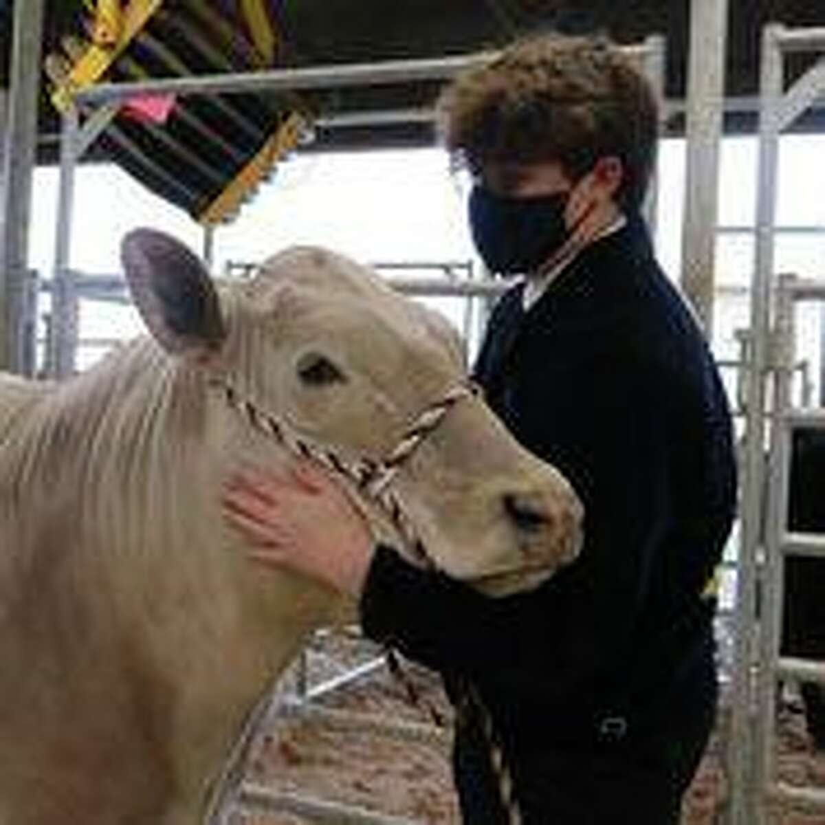 Katy High School junior Lance Nicholas has worked hard to raise his steer for the 78th Annual Katy Independent School District Livestock Show.