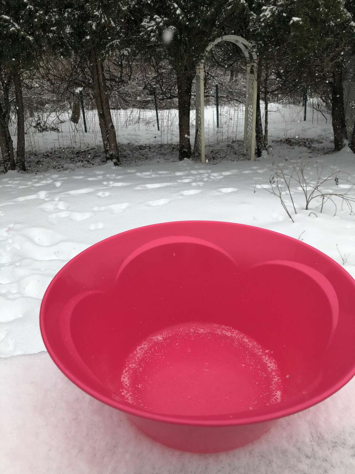 Place a large bowl on an outdoor table or surface as the snow begins to fall.
