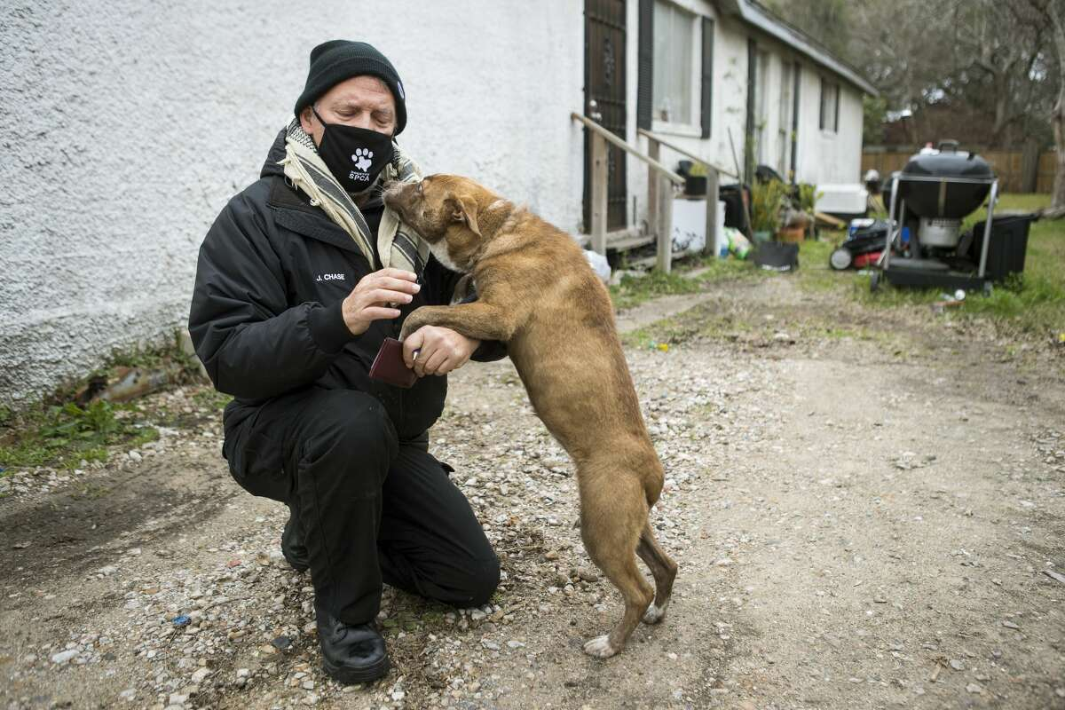 SPCA investigator Jay Chase checks on a dog that was tied up outside a house while doing an animal welfare check Saturday, Feb. 13, 2021 in Houston. With frigid temperatures forecast in Texas and the Houston area, the SPCA investigators made their rounds to various parts of the city to check on animals and their well being, and to also give out blankets and give animal owners tips on keeping their animals from the freezing weather.