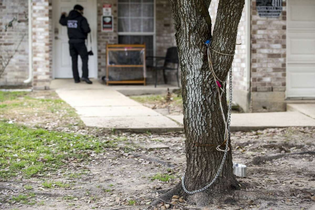 A chain that a dog was reported to be chained to a tree is shown as SPCA investigators do an animal welfare check Saturday, Feb. 13, 2021 in Houston. With frigid temperatures forecast in Texas and the Houston area, the SPCA investigators made their rounds to various parts of the city to check on animals and their well being, and to also give out blankets and give animal owners tips on keeping their animals from the freezing weather.