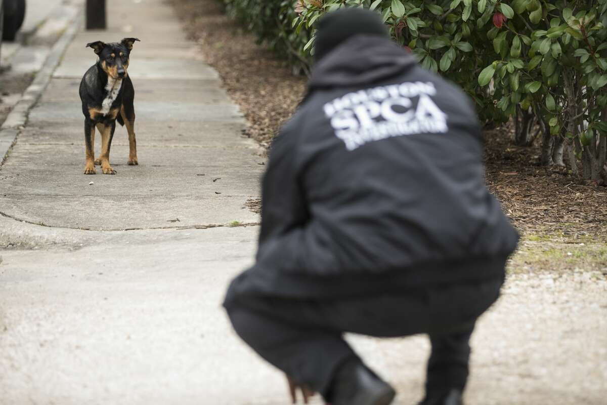 SPCA investigators D'Questyn Coleman squats down as he tries check on a stray dog while doing an animal welfare check Saturday, Feb. 13, 2021 in Houston. With frigid temperatures forecast in Texas and the Houston area, the SPCA investigators made their rounds to various parts of the city to check on animals and their well being, and to also give out blankets and give animal owners tips on keeping their animals from the freezing weather.