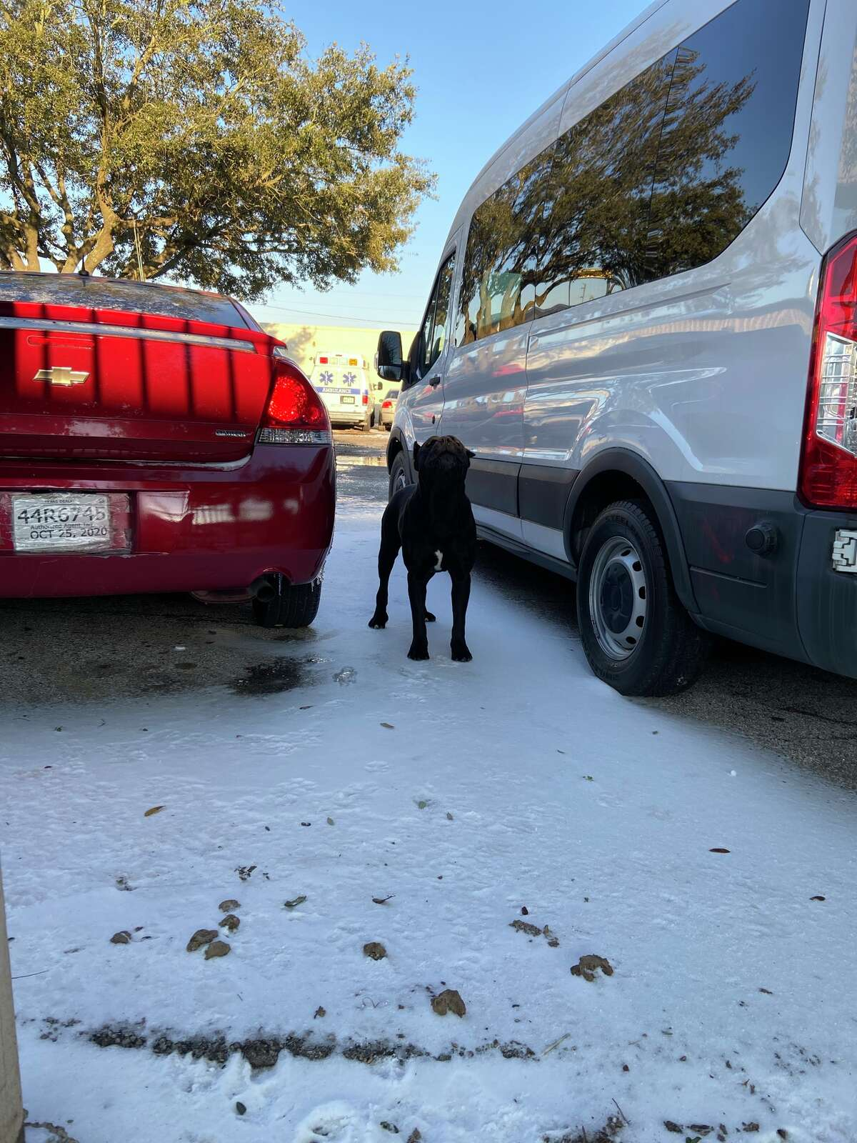 Houston police officers and the Houston SPCA on Monday, Feb. 15, responded to an auto body shop in southwest Houston, where they discovered six dogs left outside, including one that was dead. All five remaining dogs were rescued.