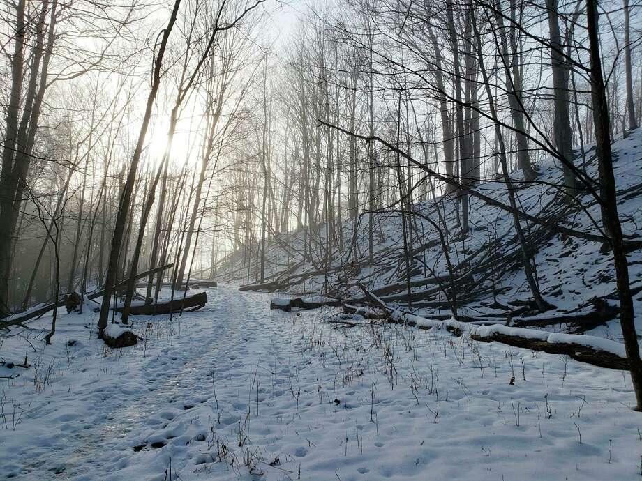 The sun shines through treesat Spirit of the Woods Conservation Club in Brethren. (File photo)