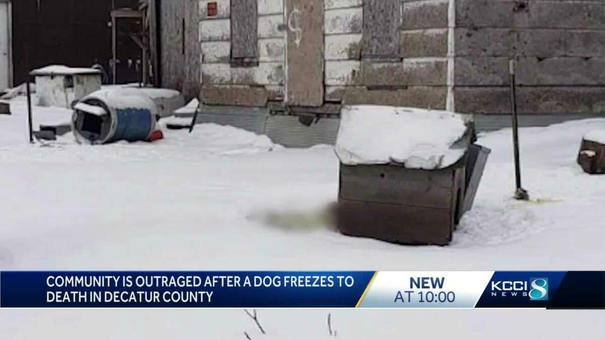 Iowa Community Outraged After Dog Freezes To Death