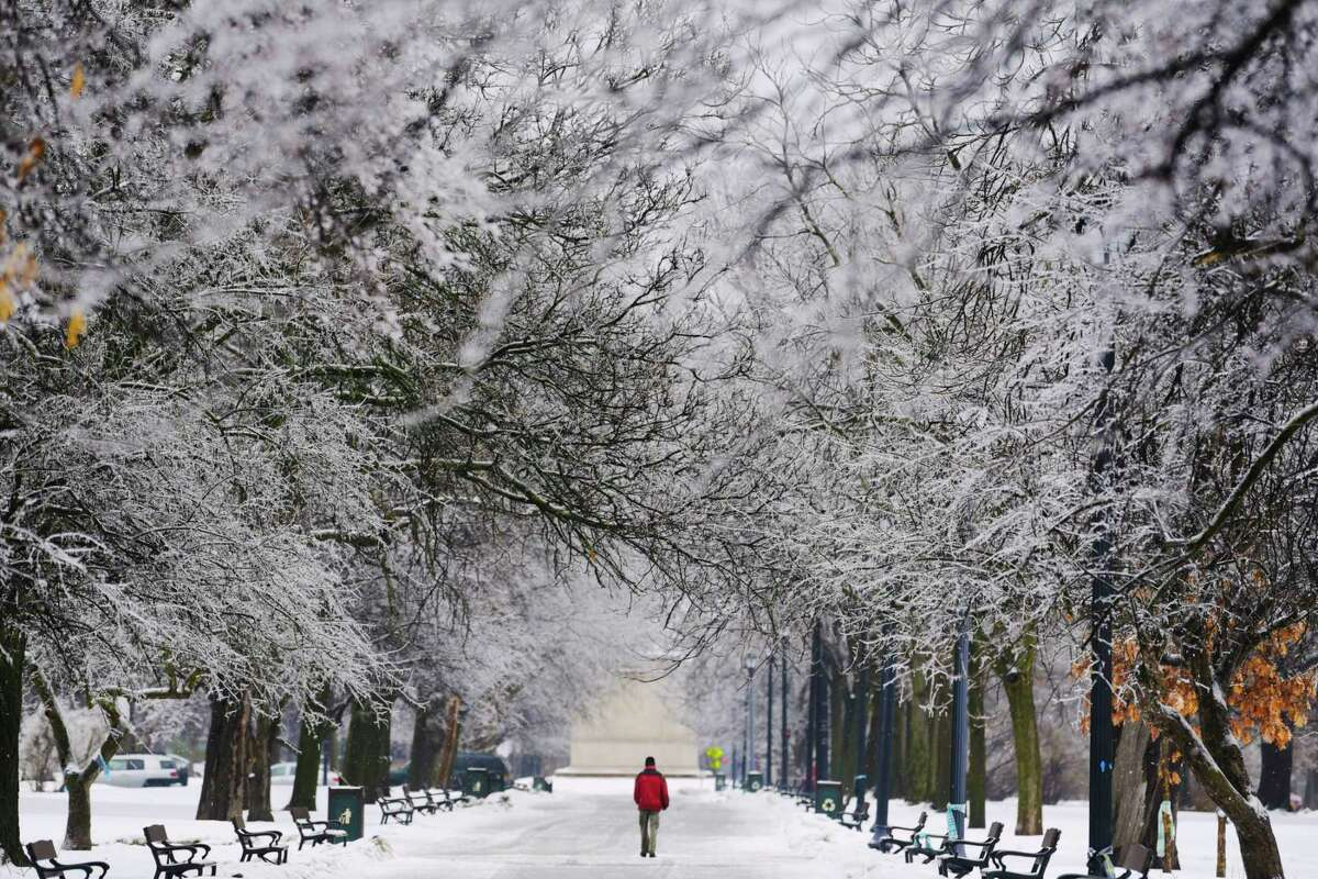 Ice covers the branches of tress in Washington Park on Tuesday, Feb. 16, 2021, in Albany, N.Y. (Paul Buckowski/Times Union)